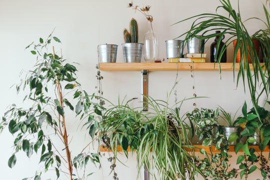 Indoor Plants & Air Pollution