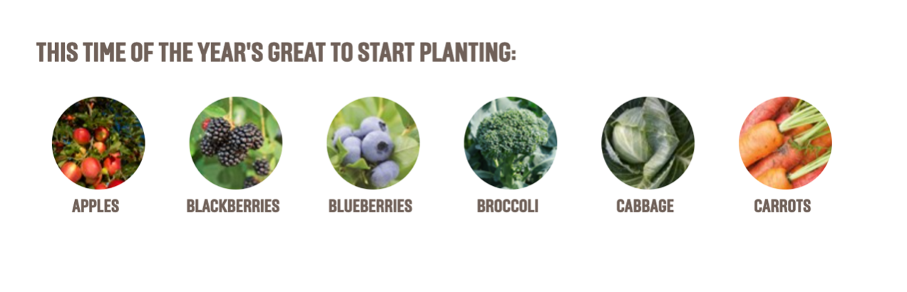 what to plant in june