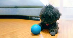 Fun Toys & Pet Friends|Motion Ball(Buy 2 Free Shipping)
