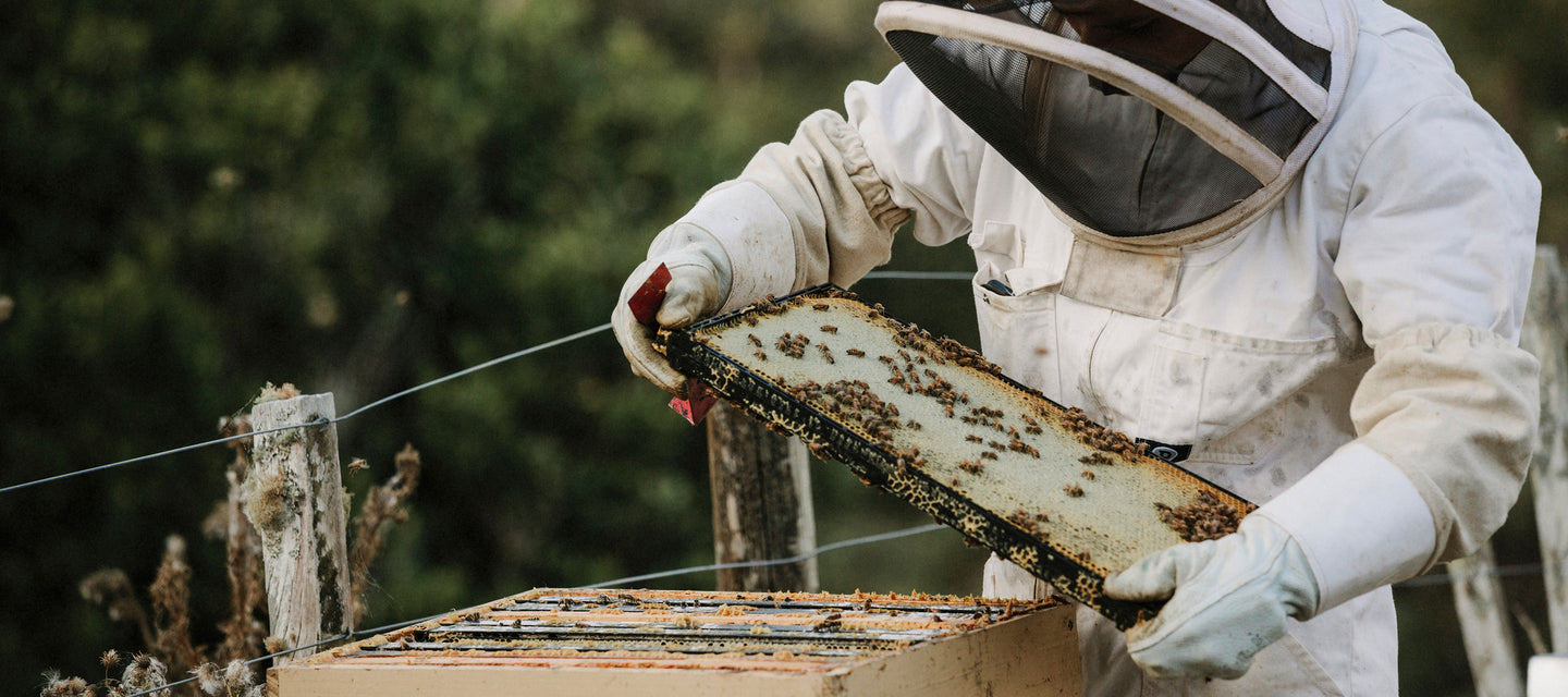 New Zealand beekeeping by Miel des Collines