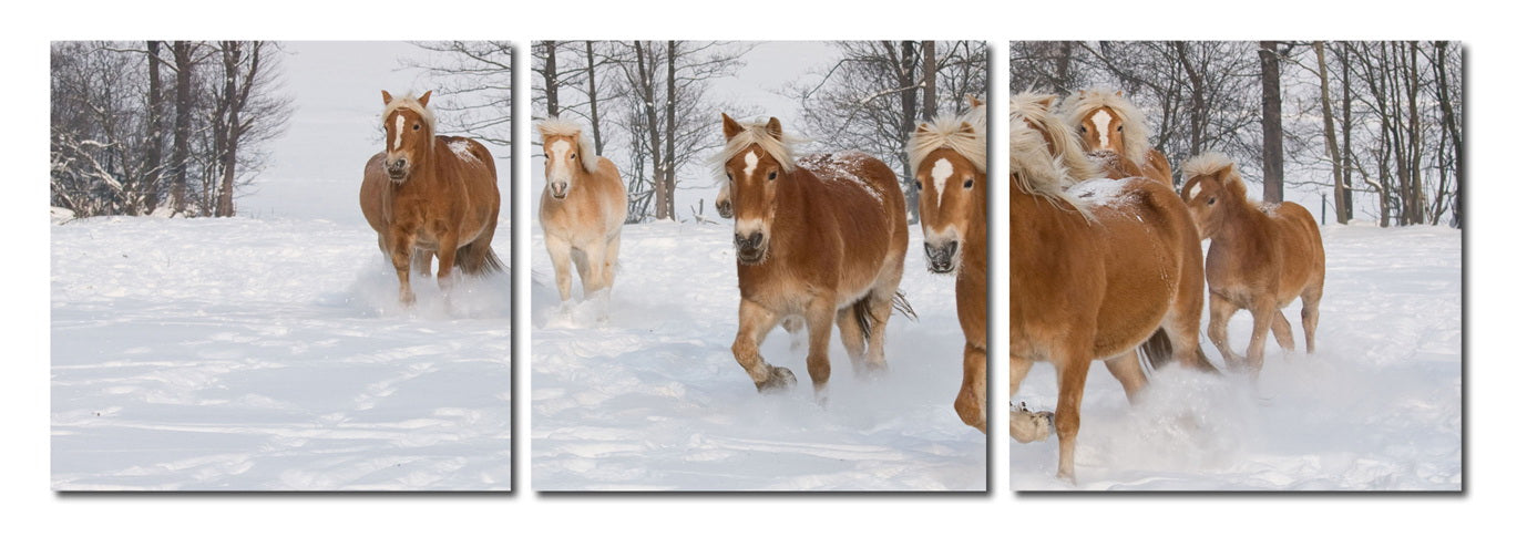 Wholesale interiors Horse Herd Mounted Photography Print Triptych VC-2050ABC