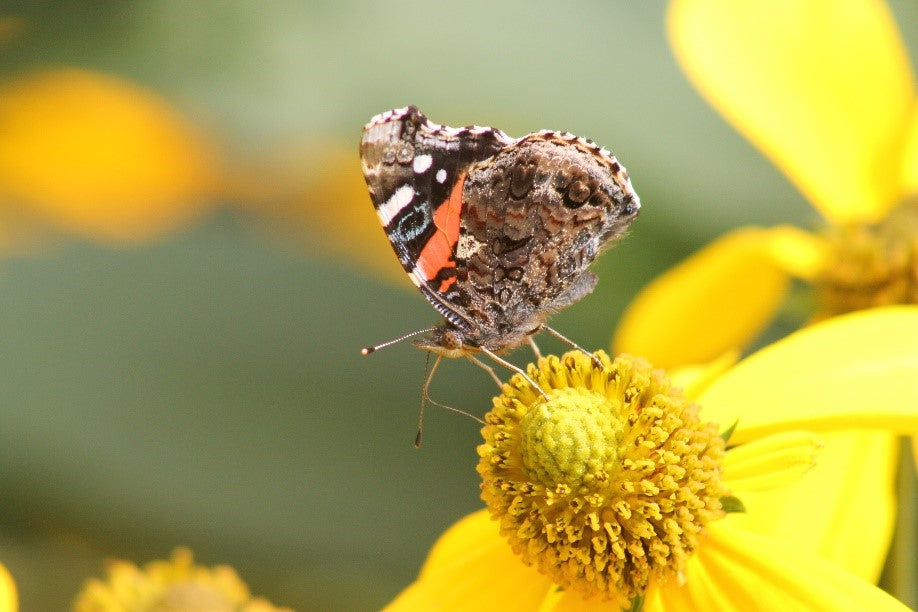 How To Attract Pollinators To Your Yard