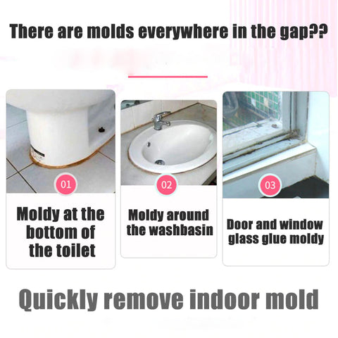 Places Mold Exists