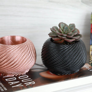 Small Swirl Planter with Succulent