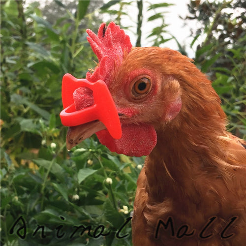 50 pcs sell like hot cakes Chicken Glasses Goggles Anti-pecking glasses Chicken necessary Retail and wholesale Weight 0.05g