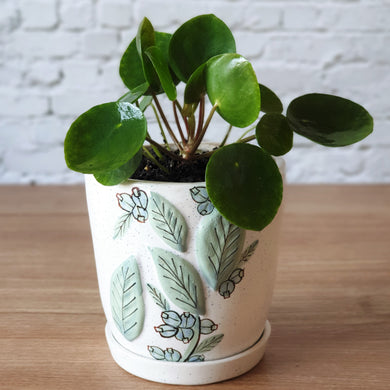 Pilea in Small Handmade Botanics Pot