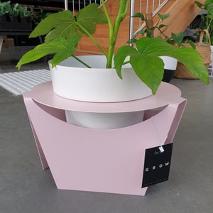 Fatsia in GROW Pressed Metal Plant Stand + Pot