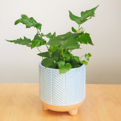 Holly Fern in Zari Planter - Dusty Blue
