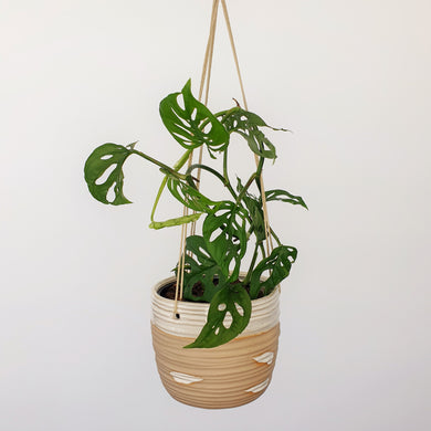 Monstera Adansonii in Swish Hanging Planter