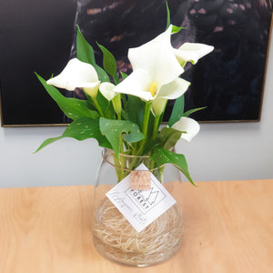 Calla Lily in Small Stella Vessel
