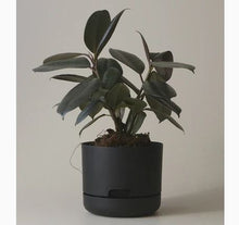 Mr. Kitly Self Watering Pots - 250mm