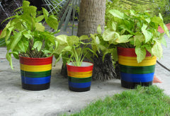 plant containers online