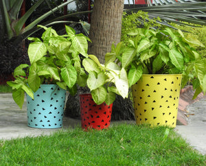 indoor-herb-planter-online-india