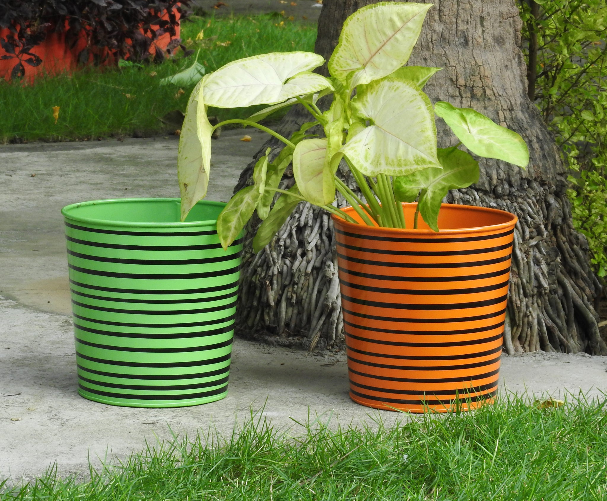 colourful-planters-set-online-India