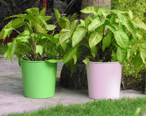 colourful-plant-container-online-india