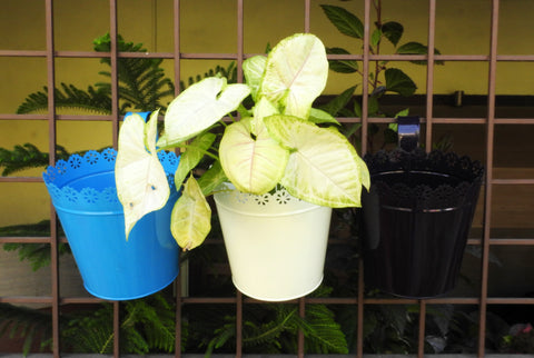 hanging plant-containers-for-window-online