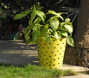plant-container-with-holes-online-india
