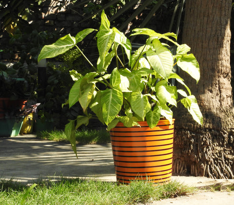 colourful-metal-planter-for-home-and-office-online-india
