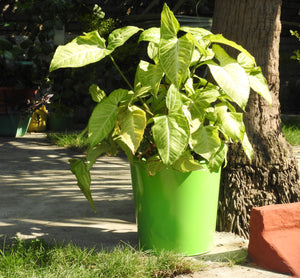 unbreakable-green-colour-plant-container-online-at-cheap-price