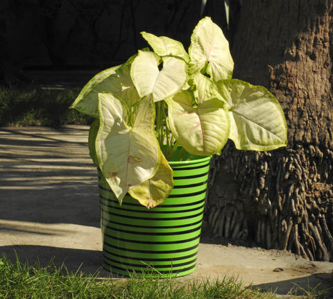 big-size-metal-plant-pot-online-india