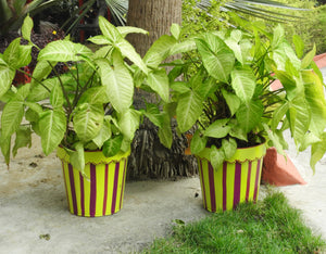 painted-small-pots-for-plants-online