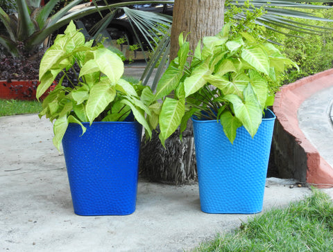 big plant-containers-online
