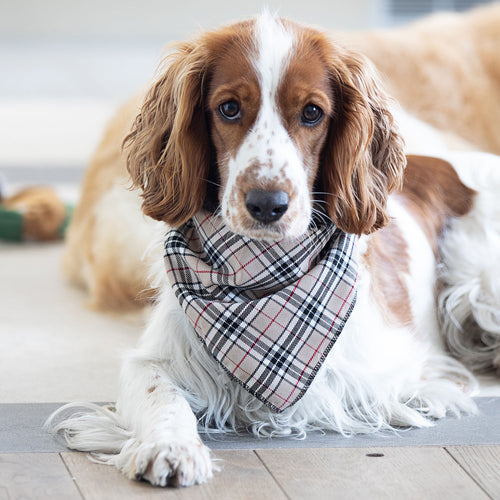 Barkberry Plaid