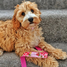 Load image into Gallery viewer, Pink Vintage Dog Lead