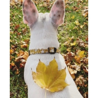 Load image into Gallery viewer, Mustard Yellow Stars Collar