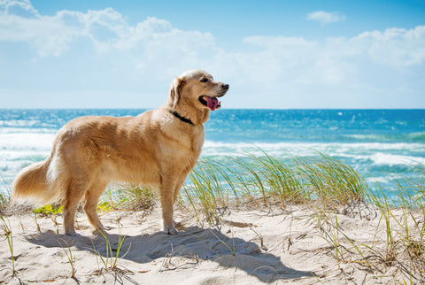 pet services illawarra and wollongong region pet friendly nsw