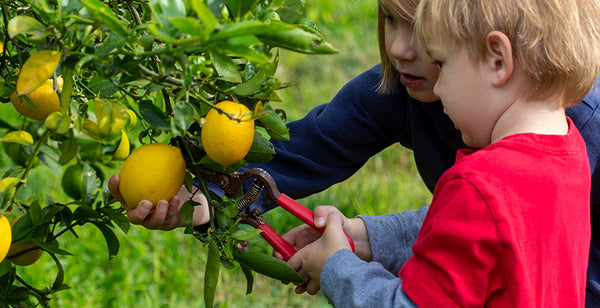 pruning-fruits-and-berries