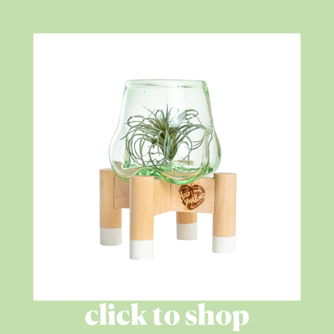 Hold On To Your Plants Terrarium
