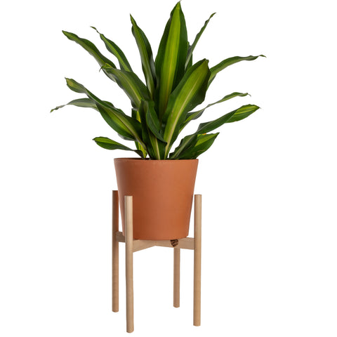 Modern Plant Stand Neutral, Large