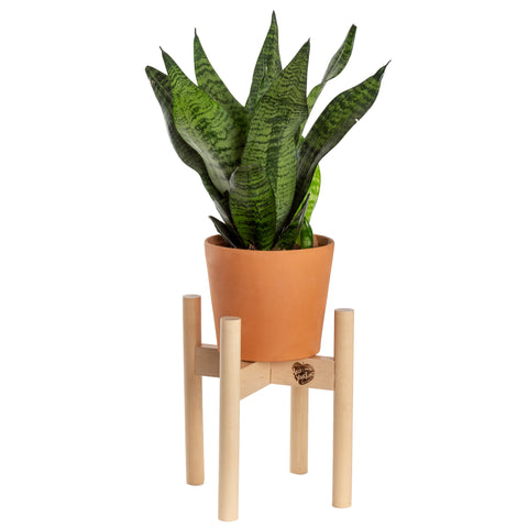 Modern Plant Stand Neutral, Small