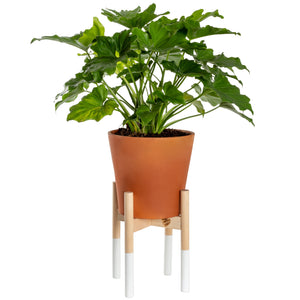 Modern Plant Stand White, Large