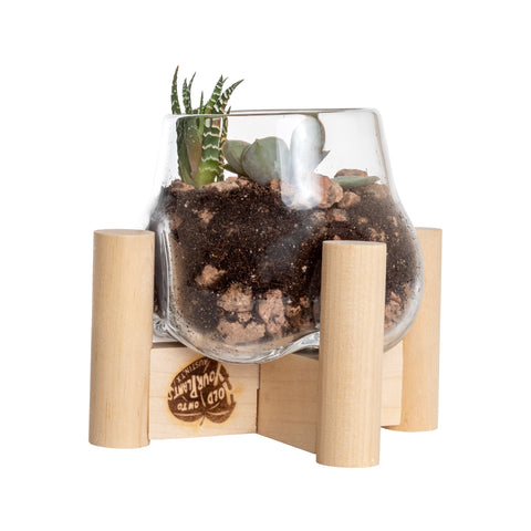 Terrarium and Neutral Modern Stand, Mini
