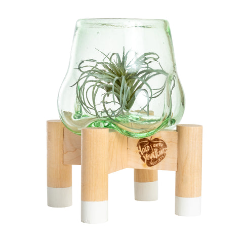 Terrarium and White Modern Stand, Mini
