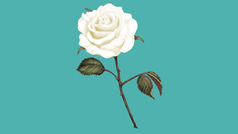 Florence Nightingale Foundation White Rose Appeal