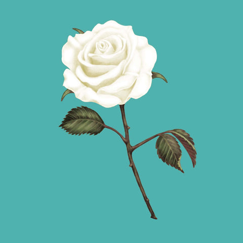 Florence Nightingale Foundation's White Rose Appeal