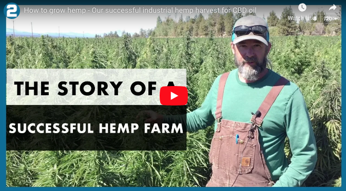 THE STORY OF A SUCCESSFUL HEMP FARM