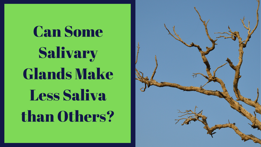 Can Some Salivary Glands Make Less Saliva than Others?