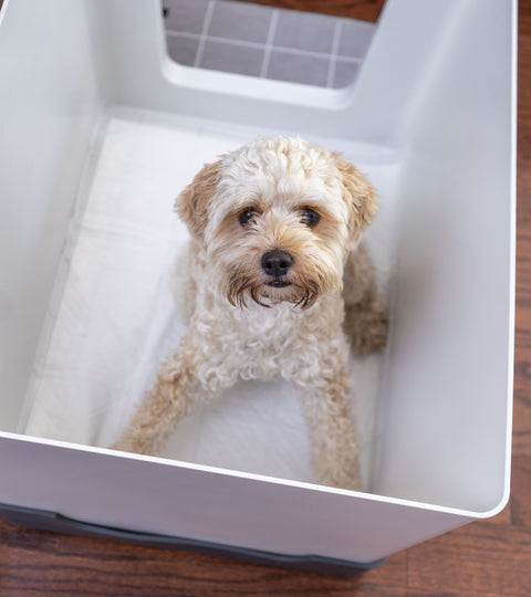 Does Your Dog Think The Doggy Bathroom Is a Crate?