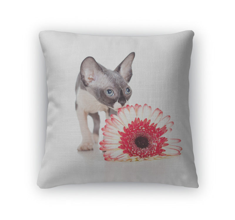 Throw Pillow, Canadian Sphynx Kitten With African Daisy Flower