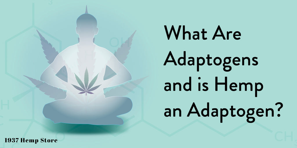 What Are Adaptogens and Is Hemp an Adaptogen
