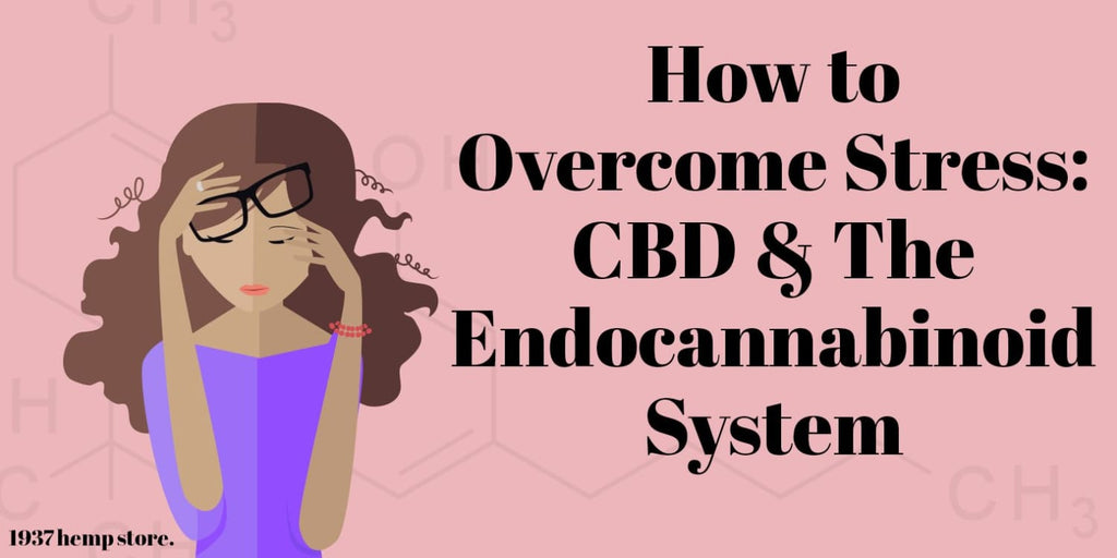 How to Overcome Stress: CBD & The Endocannabinoid System