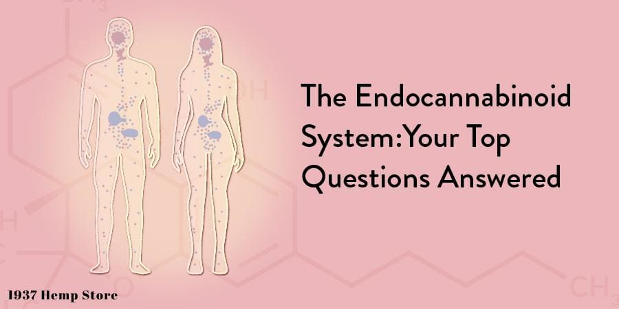 The Endocannabinoid System:  Your Top Questions Answered