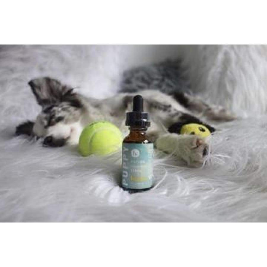 Buzzn | Puppy Potion CBD Oil (1oz 250mg) - CBD Pets