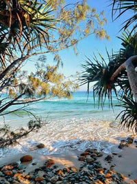 Byron Bay By Eve Miskin