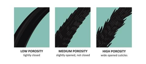 Hair Porosity Guide