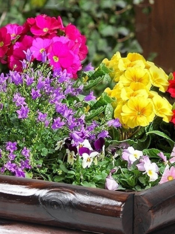 Mixed Spring Planter